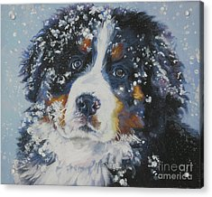 Bernese Mountain Dog Puppy Acrylic Print