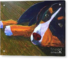 Bernese Mtn Dog On The Deck Acrylic Print by Donald J Ryker III