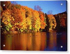 Bernharts Dam Fall 008 Acrylic Print by Scott McAllister