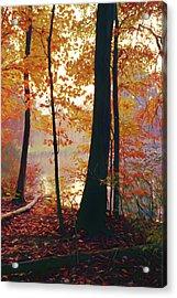Bernharts Dam Fall 031 Acrylic Print by Scott McAllister