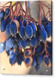 Berries Blue Too Acrylic Print