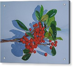 Berries Acrylic Print by Constance Drescher