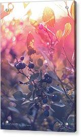 Berries In The Sun Acrylic Print