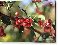 Berry Delight Acrylic Print