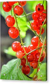 Acrylic Print featuring the photograph Berry Good by Isabella F Abbie Shores FRSA