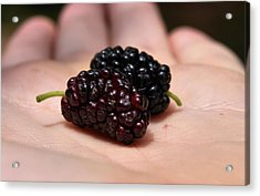 Berry Handy 2 Acrylic Print by Karen Scovill