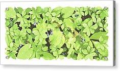 Berry Landscape Acrylic Print