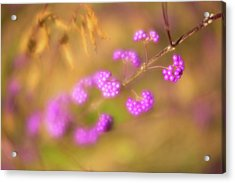 Acrylic Print featuring the photograph Berry Soft by Brian Hale