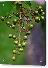 Berry Truly Yours  Acrylic Print by Michael Putnam