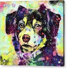 Best Friend Acrylic Print by Gary Grayson