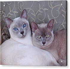 Best Friends Acrylic Print by Charlet Simmelink