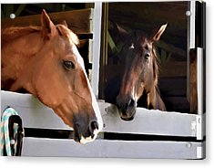 Best Friends Horse Chat Acrylic Print by Sandi OReilly