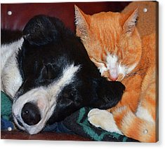 Best Friends Acrylic Print by Susie Fisher
