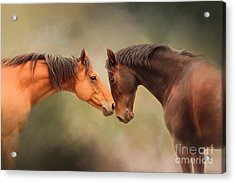 Best Friends - Two Horses Acrylic Print