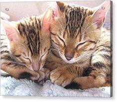 Best Friends Acrylic Print by Wendy W Sierra