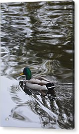 Best Of Both Worlds Acrylic Print by Richard Andrews