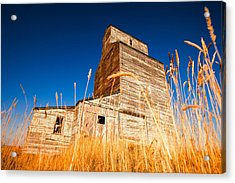 Between The Blades Of Grass Acrylic Print by Todd Klassy