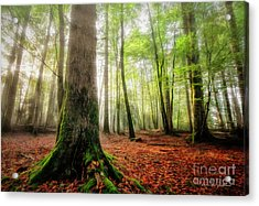 Between The Light And The Shadows Acrylic Print