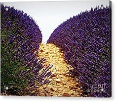 Between The Purple Acrylic Print