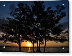 Acrylic Print featuring the photograph Between The Trees by Melanie Moraga