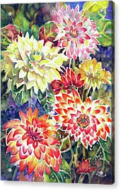 bety's Dahlias Acrylic Print