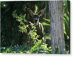 Beverly Hills Deer Acrylic Print by Marna Edwards Flavell