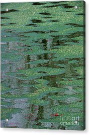 Beverly Hills St. Pats Acrylic Print by Todd Sherlock