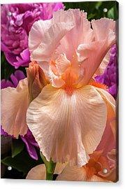Beverly Sills Iris Acrylic Print