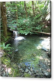 Acrylic Print featuring the photograph Beyond The End Of The Trail At Limpy Creek by Marie Neder