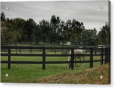 1004 - Beyond The Fence White Horse Acrylic Print