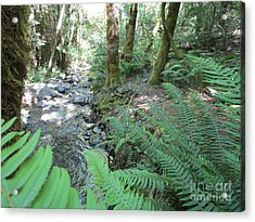 Acrylic Print featuring the photograph Beyond The Ferns by Marie Neder
