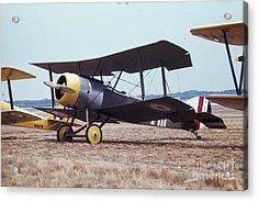 Bi-wing-4 Acrylic Print