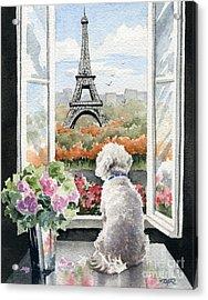 Bichon Frise In Paris Acrylic Print