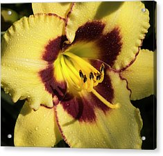 Acrylic Print featuring the photograph Bicolored Lily by Jean Noren