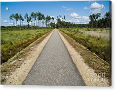Bicycle Track Passing Through The Landes Forest Acrylic Print by Sami Sarkis