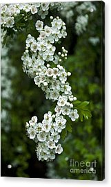 Bidwell Park Bouquet Acrylic Print by Richard Verkuyl