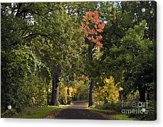 Bidwell Park By One Mile Acrylic Print