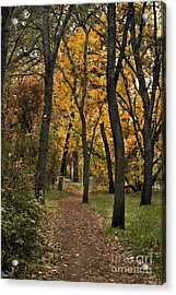 Bidwell Park Fall Acrylic Print by Richard Verkuyl