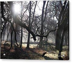 Bidwell Park Sunrise Acrylic Print