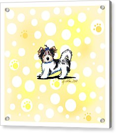 Biewer Terrier Banana Cream Acrylic Print by Kim Niles