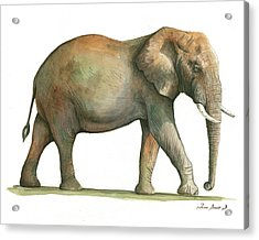 Big African Male Elephant Acrylic Print by Juan Bosco