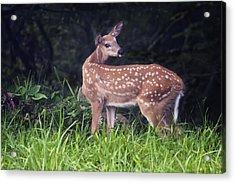 Big Bambi Acrylic Print
