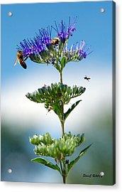 Big Bees Little Bee Acrylic Print