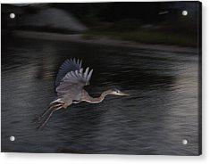 Big Blue Heron In Flight-debbie-may Acrylic Print by Debbie May
