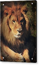 Big Boy Acrylic Print by Laurie Search