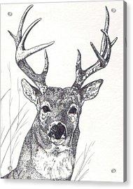 Big Buck Acrylic Print by Debra Sandstrom