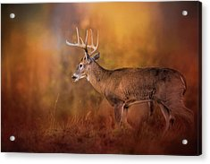 Big Buck In Autumn White Tailed Deer Art Acrylic Print