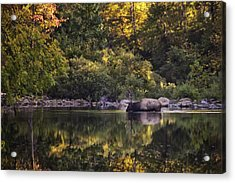 Big Bull In Buffalo National River Fall Color Acrylic Print