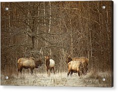 Acrylic Print featuring the photograph Big Bull Meeting In Boxley Valley by Michael Dougherty