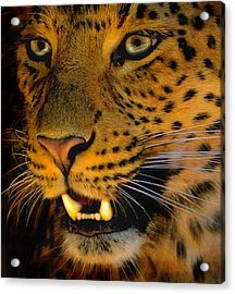 Acrylic Print featuring the painting Big Cat by Louise Fahy